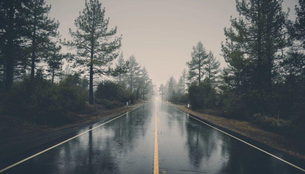 street trees rain mist fog road empty gloomy sad dark pine trees environment